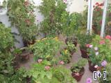 Concurso de patios y balcones