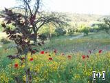 Paisaje de nuestro valle